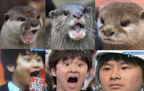 王珞丹撞脸葛优算什么!日本明星和动物都撞脸啦!